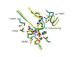 Enolase Enzyme