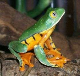 Frog study takes leaf out of nature's book