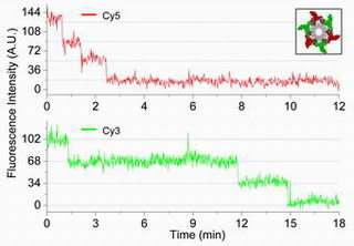 New single-molecule imaging system ends pRNA debate over phi29 motor