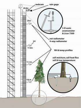 How trees manage water in arid environments