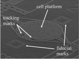 'Micro-Rack' Measures Cell Mechanical Properties