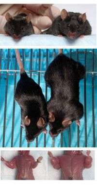'Mighty mice' made mightier