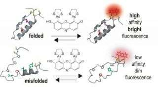 New technology illuminates protein interactions in living cells