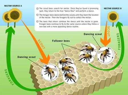 Bee strategy helps servers run more sweetly