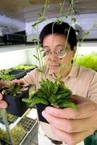 Zhixiang Chen Studies a Plant Virus