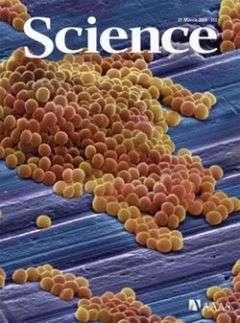 Scientists uncover how superbug Staph aureus resists our natural defenses