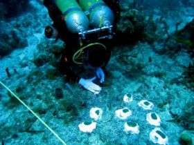 8-day undersea mission begins experiment to improve coral reef restoration
