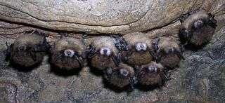 Researchers investigate mass bat deaths