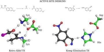 Active sites of new enzymes