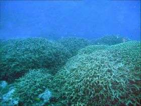 Bikini corals recover from atomic blast