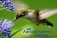 Birds, bats and insects hold secrets for aerospace engineers
