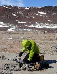Burrow Excavation