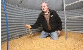 Defining gene's role may lead to prevention of dangerous corn toxin