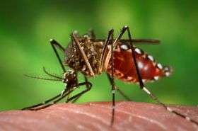 Discovery could lead to attack on mosquito-borne disease