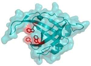 New discovery linked to DNA repair and cancer