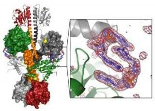 Finely tuned WspRs help bacteria beat body by building biofilm