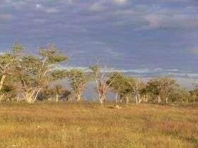 Fires regenerate African grassland