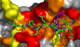 Molecule stops DNA replication in its tracks