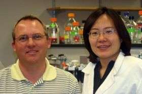 Plant flavonoid found to reduce inflammatory response in the brain
