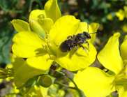 Pollinator decline not reducing crop yields just yet