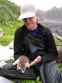 Rats on islands disrupt ecosystems from land to sea, researchers find