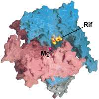 Rifamycin antibiotics attack tuberculosis bacteria with walls, not signals