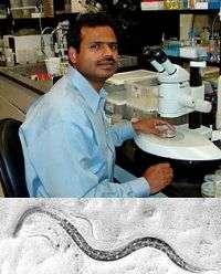 Scientist explores secrets to life through worms