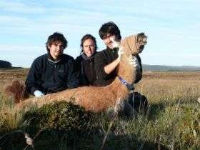 Study of guanacos launched in Chile