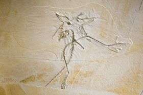 The Thermopolis Archaeopteryx Fossil