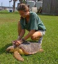 Turtle studies suggest health risks from environmental contaminants