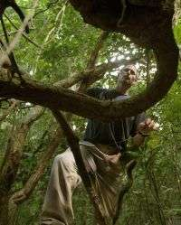 Vine invasion? Ecologist looks at coexistence of trees and lianas
