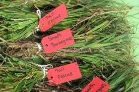 Which grass is greener to power the bioenergy era?