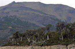 A partial view of the lenga's forest