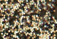 Biofunctionalized magnetic-vortex microdiscs