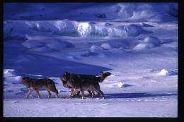 Bone Deformities Linked to Inbreeding in Wolves of Isle Royale