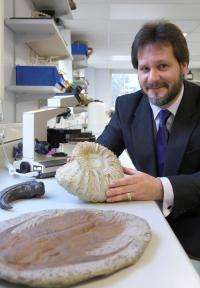 Dinosaur fossils fit perfectly into the evolutionary tree of life