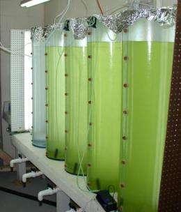 Fill 'er up -- with algae