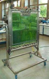 'Green' energy from algae