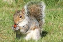 Study sheds light on squirrel psychology
