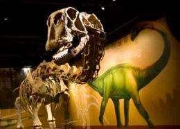 World's first skeletal mount of Paluxysaurus jonesi reveals new biology