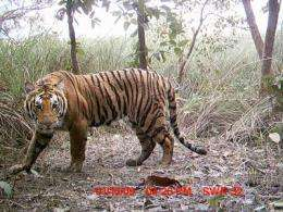 121 breeding tigers estimated to be found in Nepal