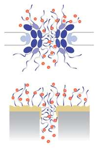 Researchers construct a device that mimics one of nature's key transport machines