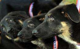 South Korean scientist Hwang Woo-Suk plans to present two cloned dogs to one of the country's provinces