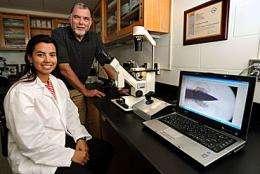 ISU researchers working to develop, market embryonic test for bovine genetics
