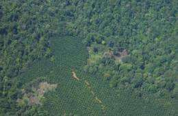 Smithsonian scientist warns that palm oil development may threaten Amazon