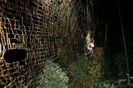 Scientists discover largest orb-weaving spider