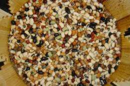 Researchers develop genetic map for cowpea, accelerating development of new varieties