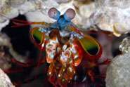 Mantis shrimps could show us the way to a better DVD