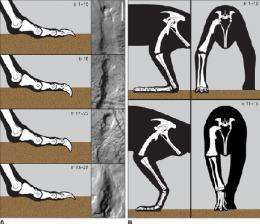 Trackway analysis shows how dinosaurs coped with slippery slopes