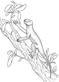 Scientist describe first vertebrate to live in trees
